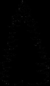 pine-31913_960_720